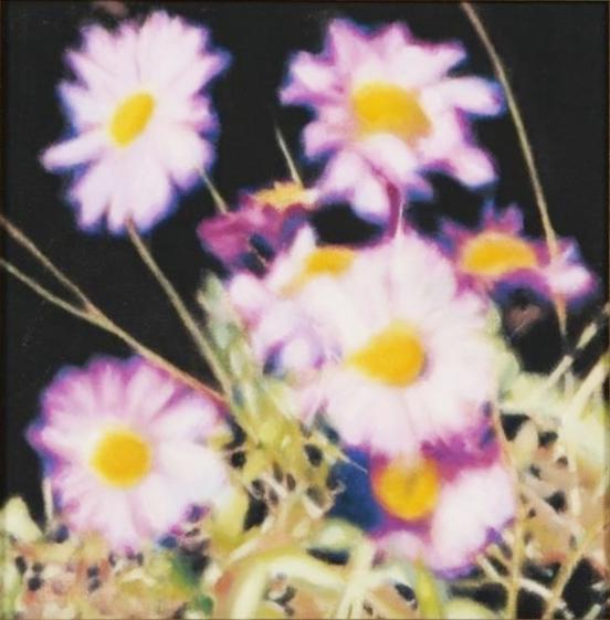 "Michael Haykin - ""Daisies"""
